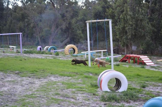 Banksia Park Puppies Walida - 2 of 26