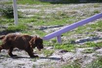 Banksia Park Puppies Walida - 20 of 26