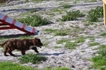 Banksia Park Puppies Walida - 21 of 26