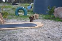Banksia Park Puppies Walida - 3 of 26