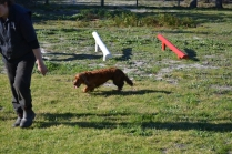 Banksia Park Puppies Wally - 10 of 13