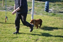 Banksia Park Puppies Wally - 11 of 13
