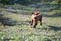 Banksia Park Puppies Wally - 2 of 13
