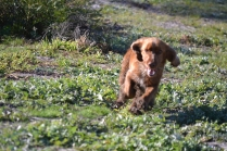 Banksia Park Puppies Wally - 3 of 13