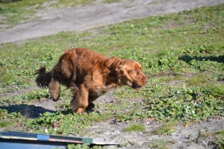 Banksia Park Puppies Wally - 7 of 13