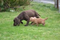 banksia-park-puppies-wanika-31-of-83