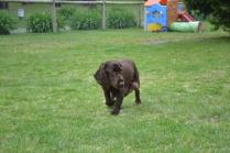 banksia-park-puppies-wanika-32-of-83
