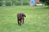 banksia-park-puppies-wanika-33-of-83