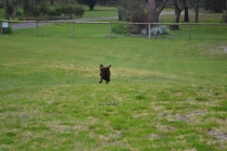 banksia-park-puppies-wanika-36-of-83