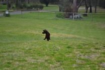 banksia-park-puppies-wanika-37-of-83