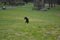 banksia-park-puppies-wanika-37-of-83