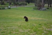 banksia-park-puppies-wanika-38-of-83