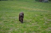 banksia-park-puppies-wanika-42-of-83