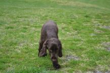 banksia-park-puppies-wanika-44-of-83