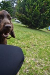 banksia-park-puppies-wanika-45-of-83