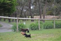 banksia-park-puppies-wanika-48-of-83