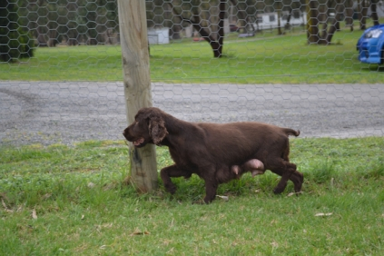 banksia-park-puppies-wanika-49-of-83