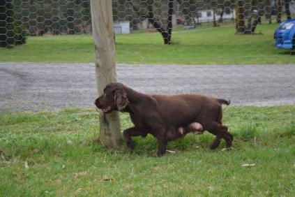 banksia-park-puppies-wanika-49-of-83