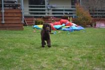 banksia-park-puppies-wanika-72-of-83