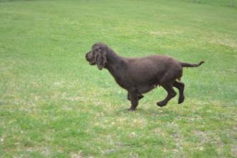 banksia-park-puppies-wanika-76-of-83