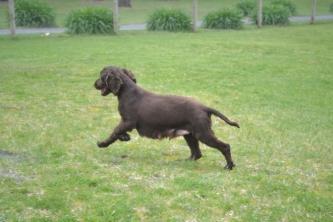 banksia-park-puppies-wanika-77-of-83