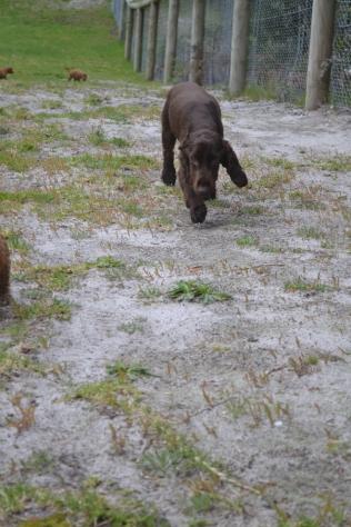 banksia-park-puppies-wanika-82-of-83