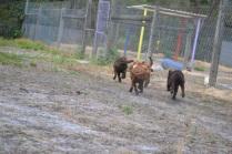 Banksia Park Puppies Meeka