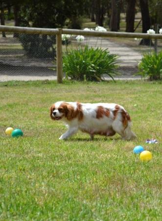 Banksia Park Puppies_Arya