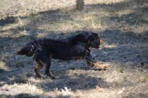 Banksia Park Puppies_Beauty