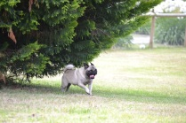 Banksia Park Puppies Boof