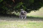 Banksia Park Puppies_BrickBanksia Park Puppies_Brick