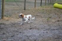 Banksia Park Puppies_Cersei