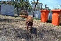 Banksia Park Puppies_Clazy