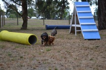 Banksia Park Puppies_Cuddles