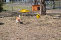 Banksia Park Puppies_Cuz