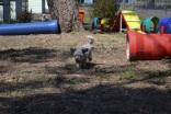 Banksia Park Puppies_Dora Didget