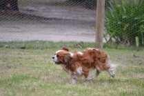 Banksia Park Puppies_joffre