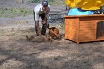 Banksia Park Puppies_Kayla