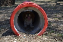 Banksia Park Puppies_Prini