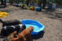Banksia Park Puppies_Rachel