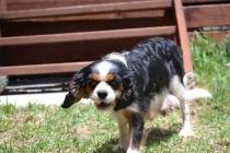 Banksia Park Puppies_Rita