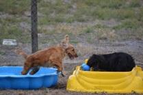 Banksia Park Puppies_Sari