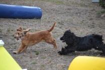 Banksia Park Puppies_SariBanksia Park Puppies_Sari