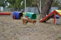 Banksia Park Puppies_Slomo