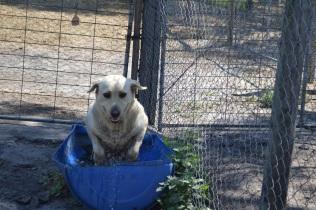 Banksia Park Puppies_Tenille