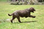 Banksia Park Puppies_Woogy