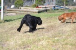 Banksia Park Pupppies Hermione - 1 of 6 (3)