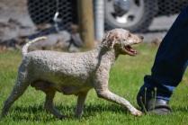 Banksia Park Puppy Bibs