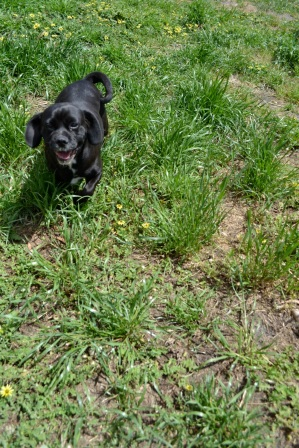 Banksia Park Puppy Coola