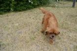 britz-banksia-park-puppies-15-of-18